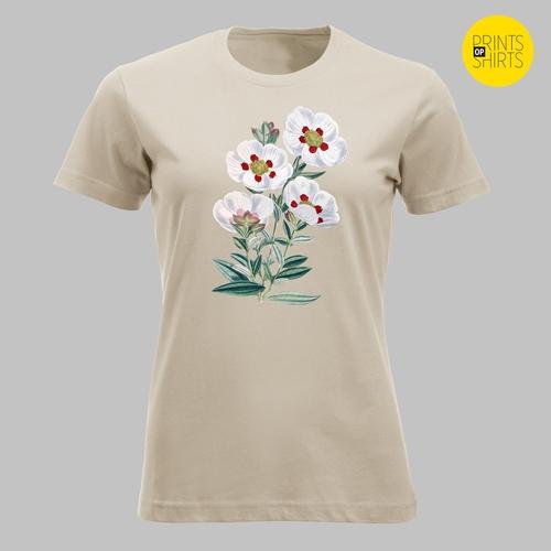 Vier witte bloemen