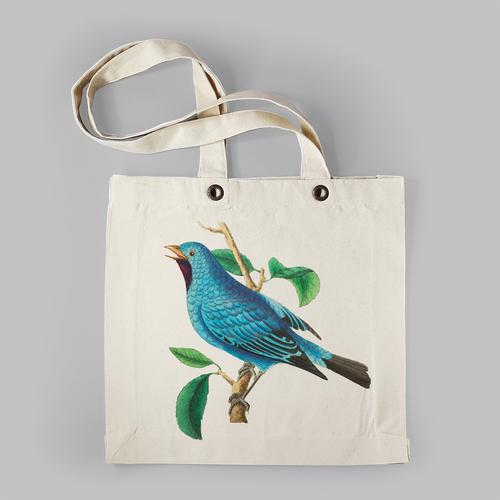 Felblauwe zangvogel