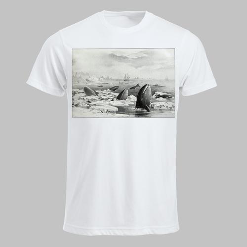 Walvissen in ijs