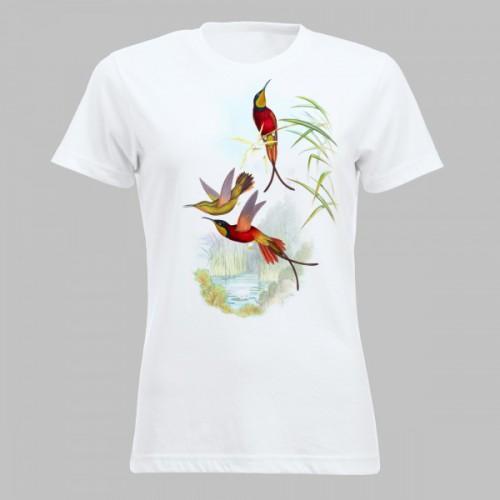 Kleurrijke kolibries - 3